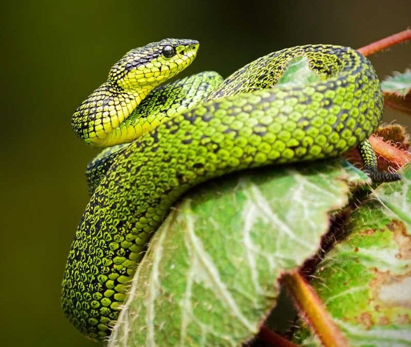 Green snake on leaf